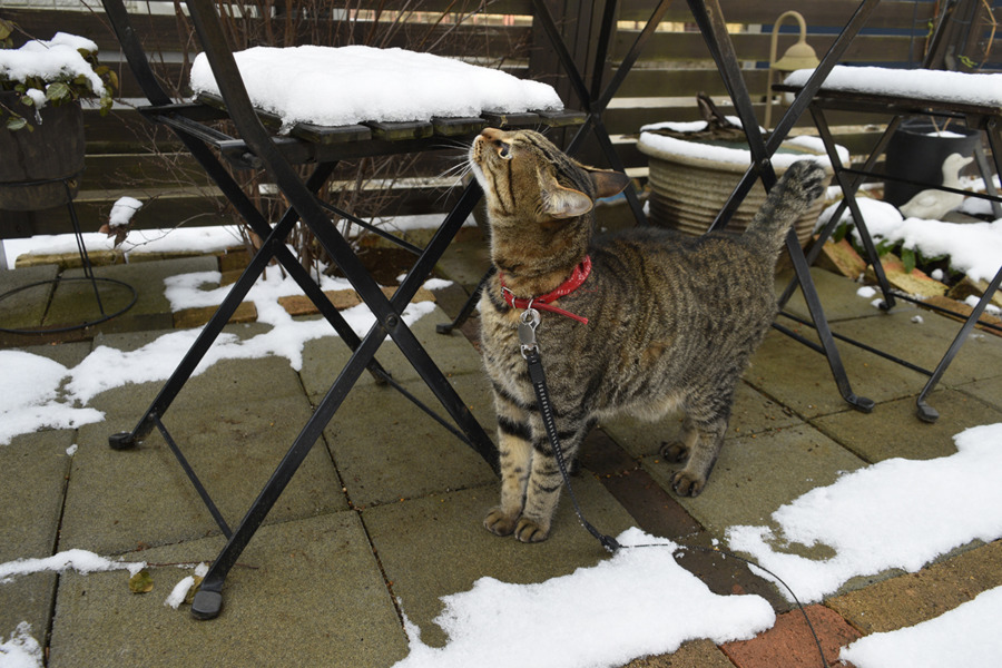 雪をチェックする虎ノ介