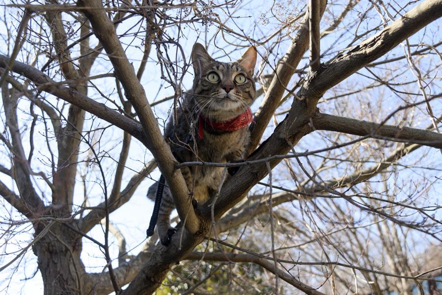 木の上で鳥を見つめる虎ノ介