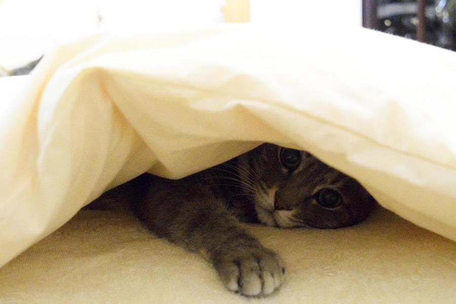 虎ノ介が眠る布団の下にもぐって寝る春太