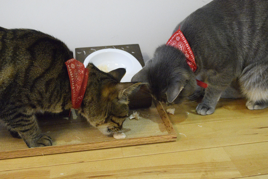 お皿の外に落ちたフリーズドライのササミを食べる虎ノ介と春太
