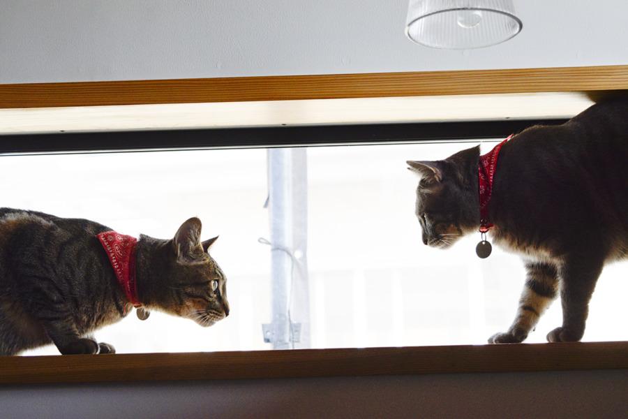 窓から外が見えるようになって喜ぶ虎ノ介と春太