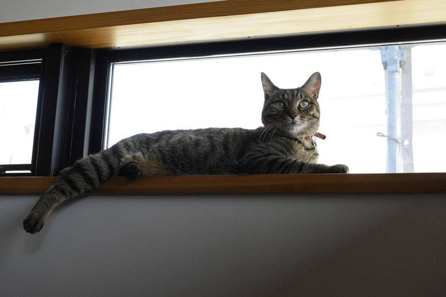 久しぶりに窓から外が見えるようになって嬉しい虎ノ介