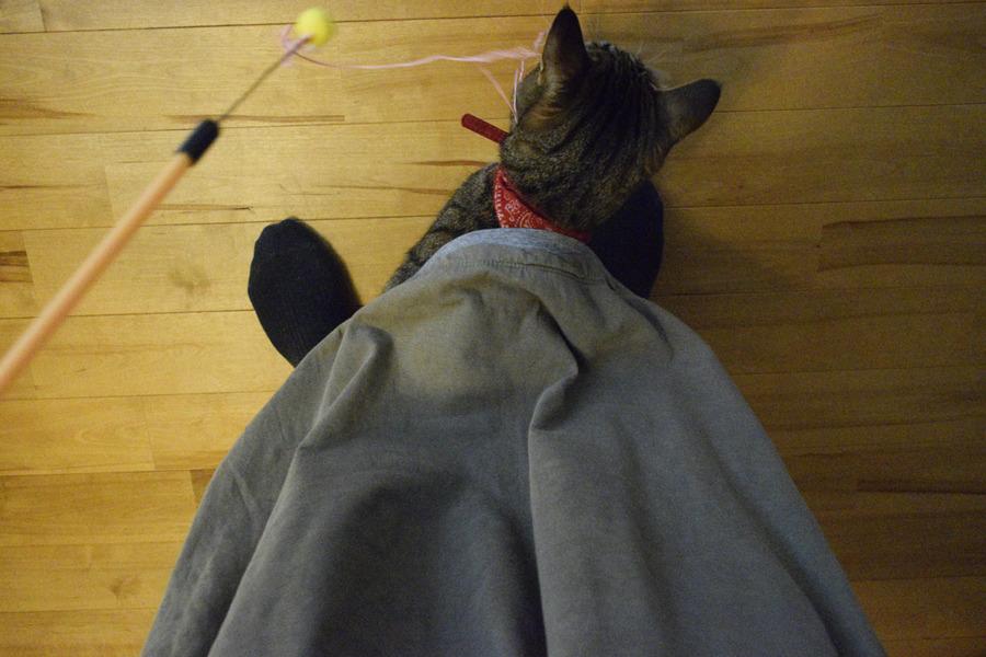 人間のスカートの下にもぐって遊ぶ虎ノ介