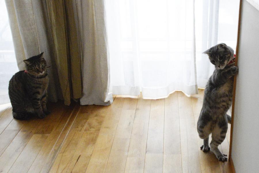 おかしな恰好で立ち上がる春太を見つめる虎ノ介