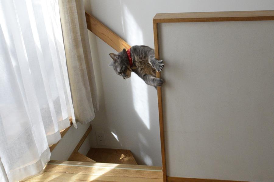 謎の体制で階段の手すりに摑まる春太