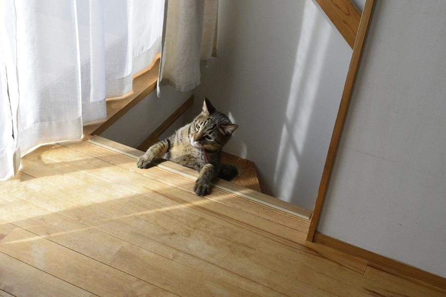 はしゃぎすぎて階段から落ちた虎ノ介