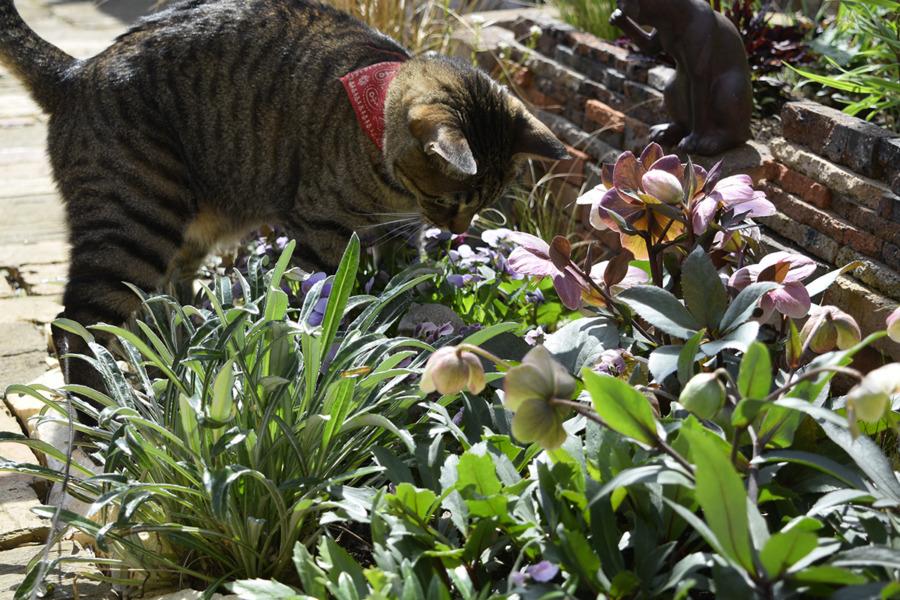 花壇の中に虫を発見した虎ノ介