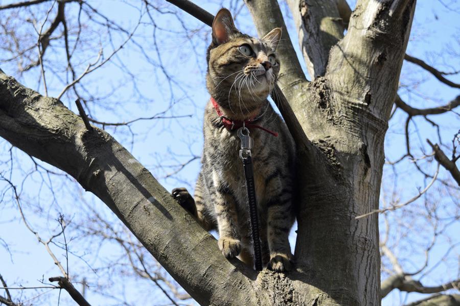 木登りして鳥を眺める虎ノ介