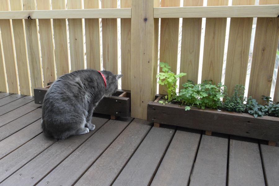 まだ芽がでてこないプランターを覗く春太