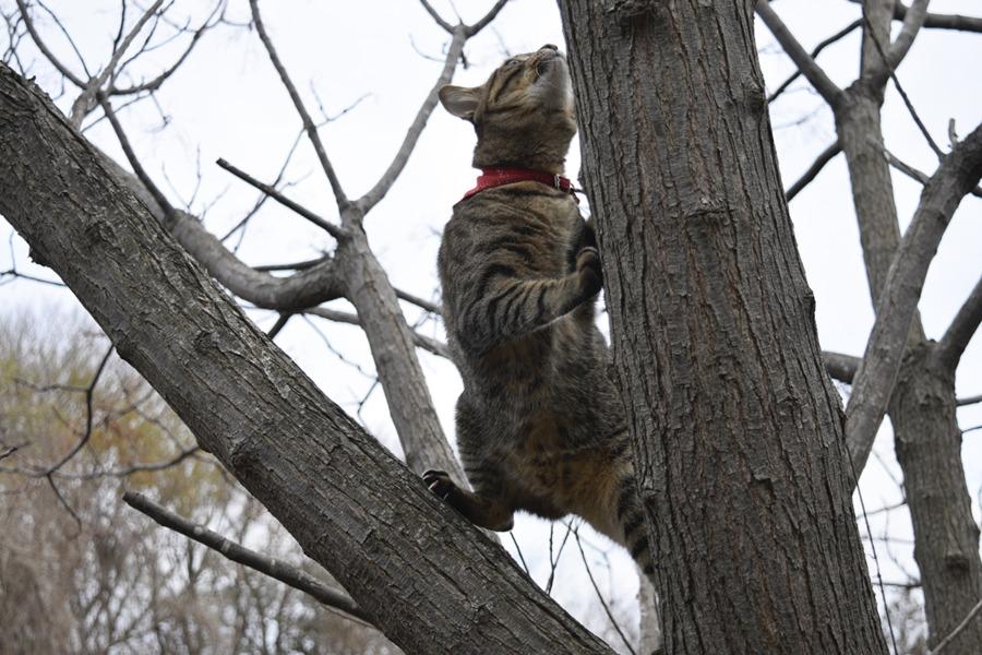 鳥をみて興奮して木に登る虎ノ介