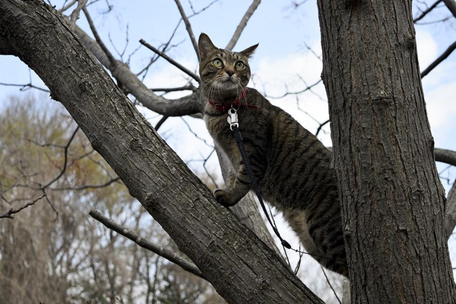 木の上で犬に警戒する虎ノ介