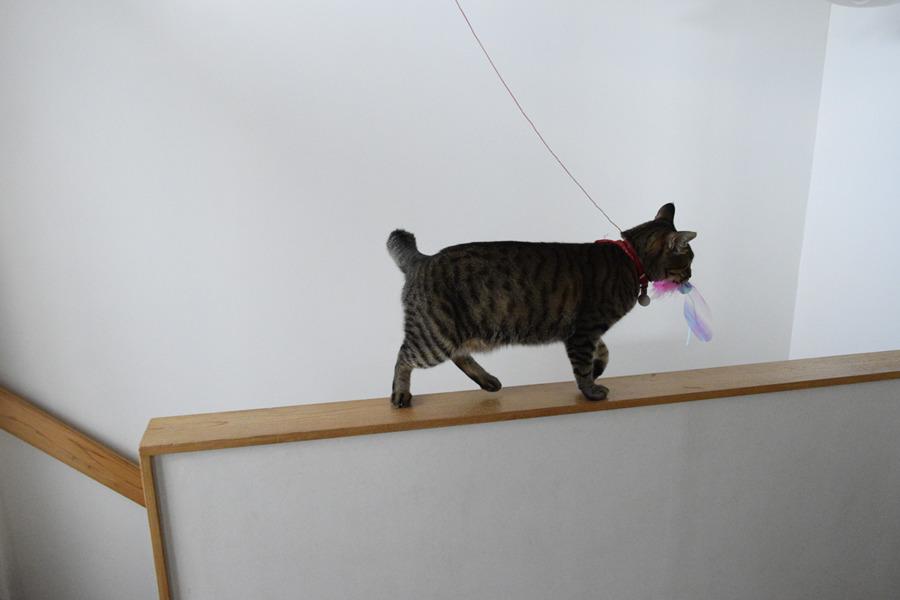 猫じゃらしを咥えて部屋にもって帰ろうとする虎ノ介