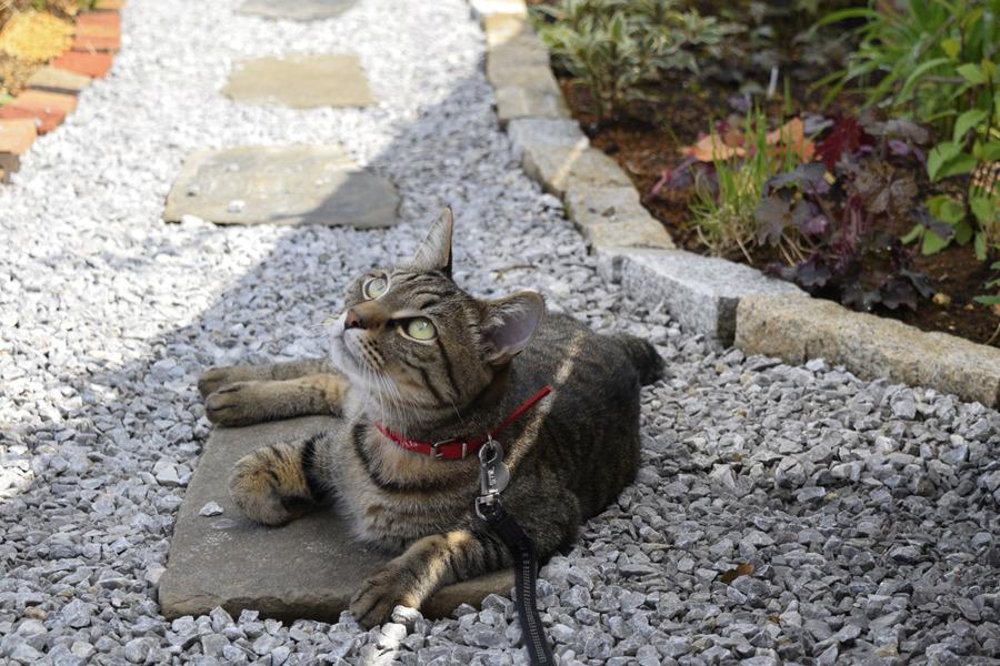 お散歩を満喫する虎ノ介