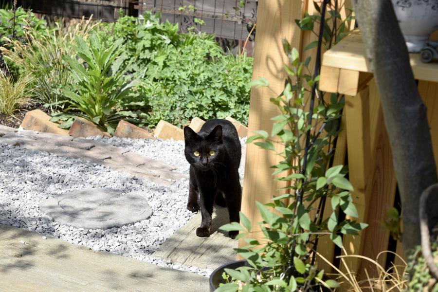 庭に現れた見知らぬ黒猫