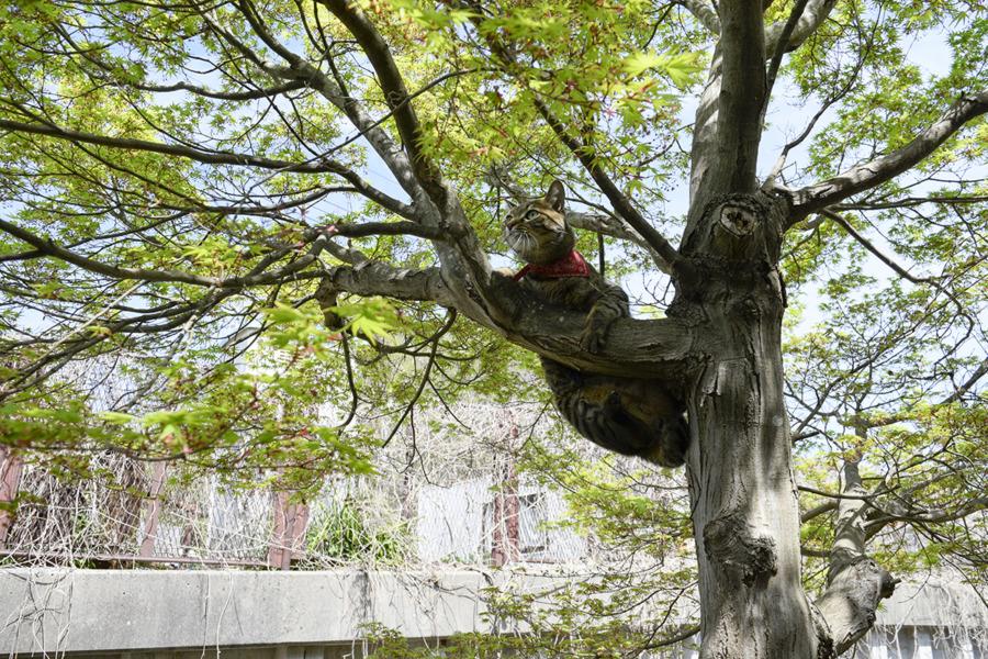 木から滑り落ちそうになる虎ノ介