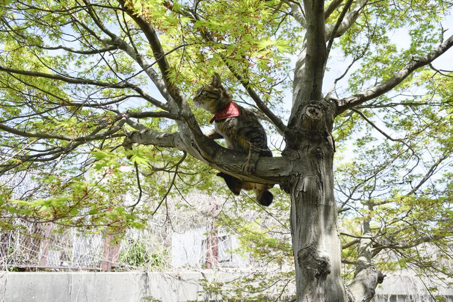 木から落ちても同様しない虎ノ介