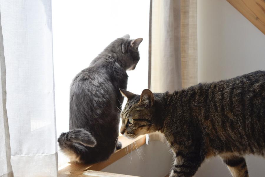 窓辺で毛を乾かす虎ノ介と春太