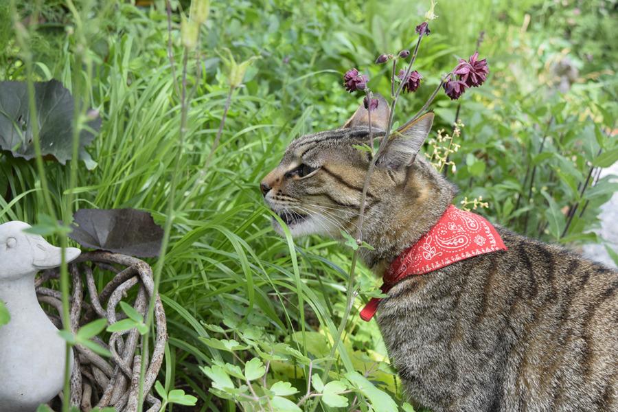 庭の草を食べる虎ノ介
