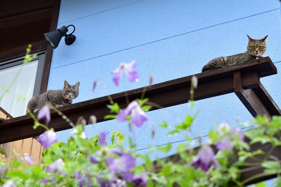 ベランダから庭を見る虎ノ介と春太