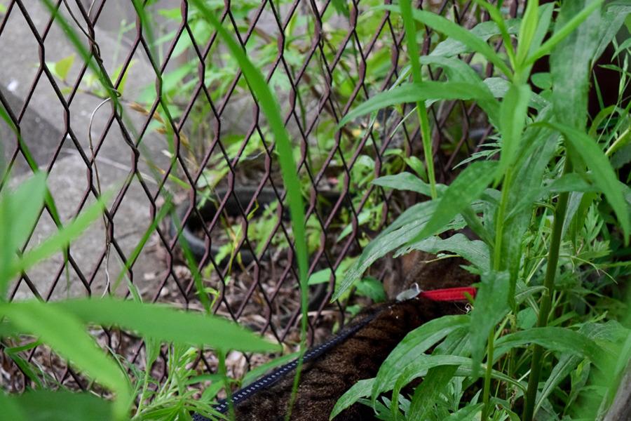 昨日ヘビがいた場所にきた虎ノ介