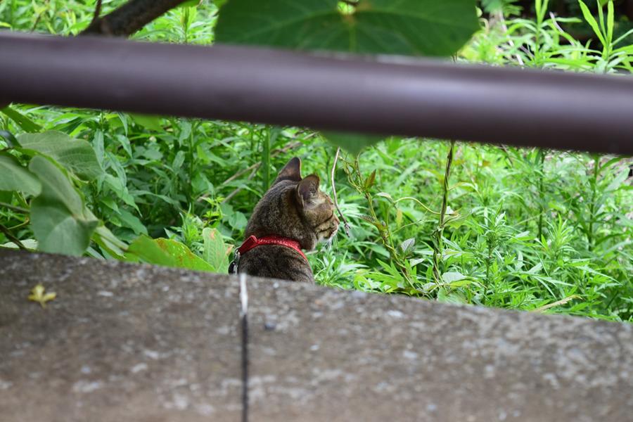 去年ヘビに遭遇した場所に移動する虎ノ介