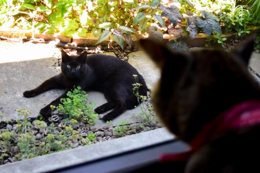 勝手口で見知らぬ猫を見つめる虎ノ介
