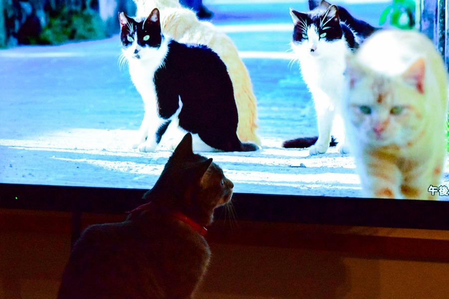 ネコ歩きを見る春太