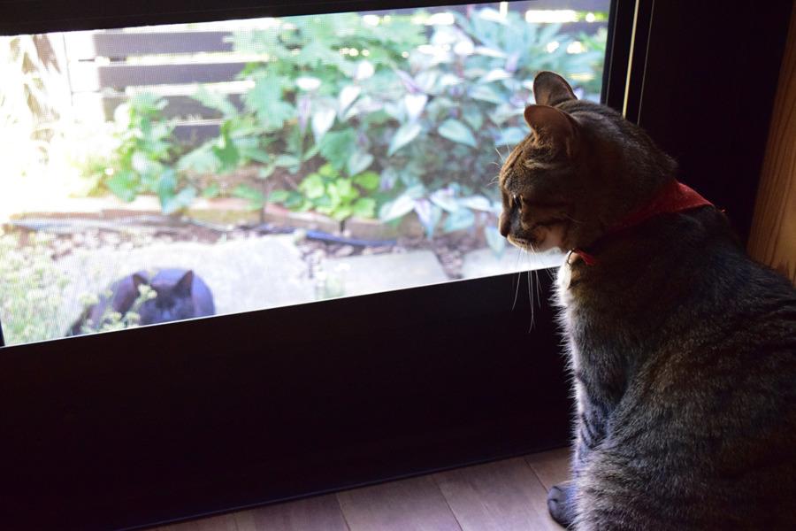 勝手口にきた見知らぬ猫をみつめる虎ノ介