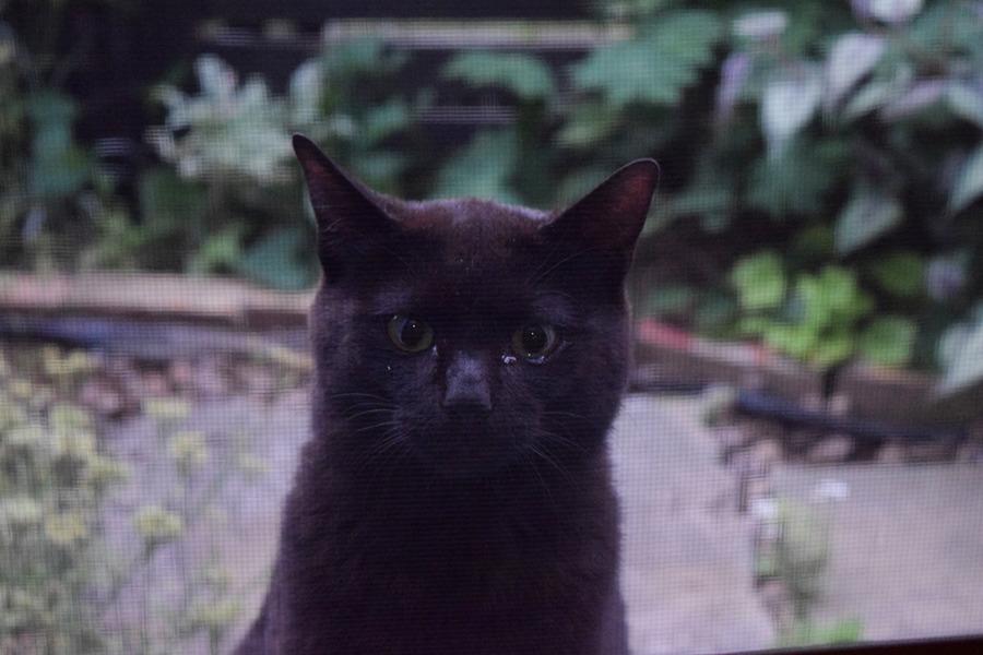 勝手口の外にきた見知らぬ猫