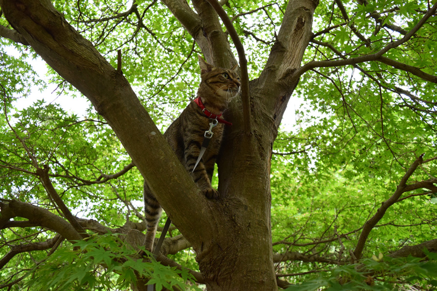 木登りする虎ノ介