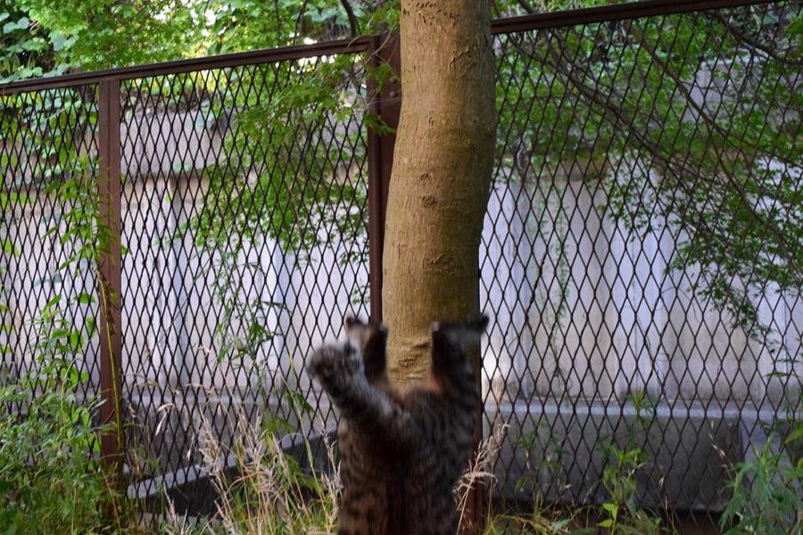 スケキヨ状態で木から落ちる虎ノ介