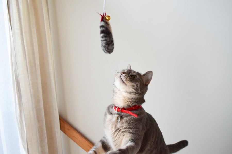 たまぞうさん製作のとらのしっぽ猫じゃらしに興味津々の春太
