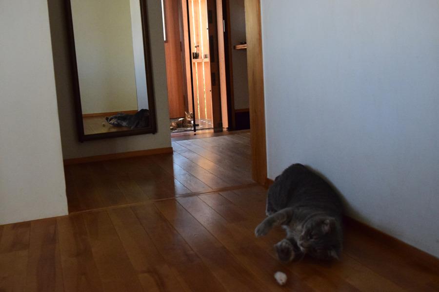 外玄関で涼む虎ノ介