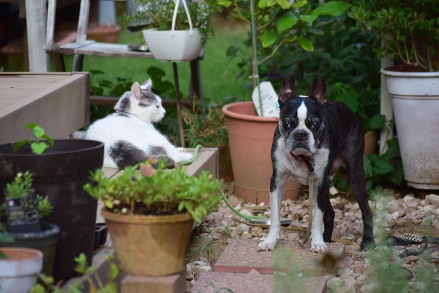 人間のお友達のところの猫と犬