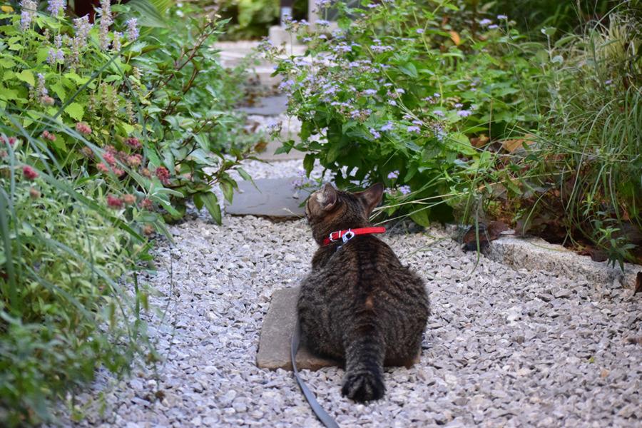 庭の様子を眺める虎ノ介