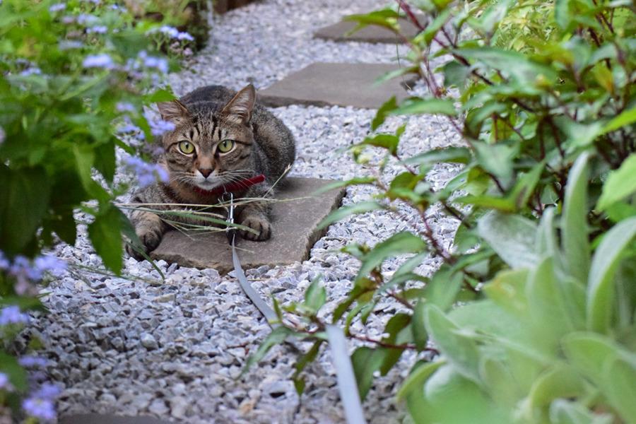 庭で獲物を狙う虎ノ介