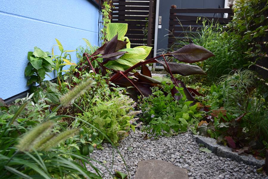 台風で倒れた庭の植物