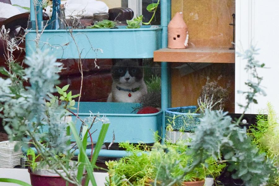 人間のお友達のお庭の猫