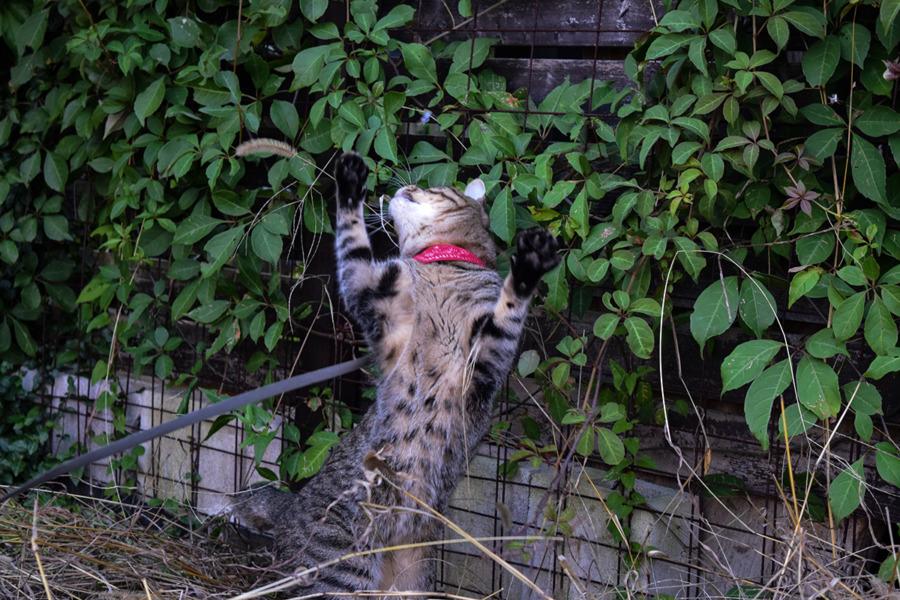 庭で狩りをする虎ノ介