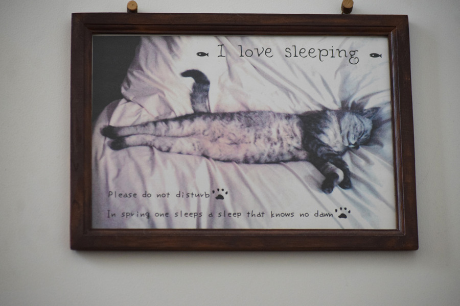 先代猫ちゃーちゃんの写真