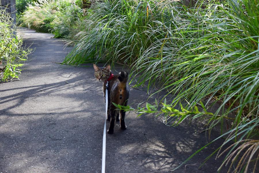 散歩にでかける虎ノ介