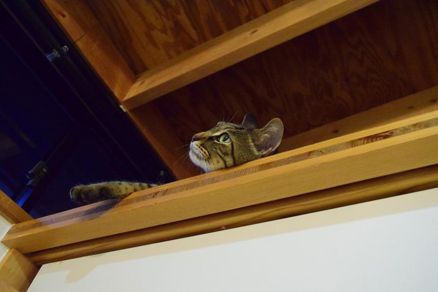 新入りネコに思いをはせる虎ノ介