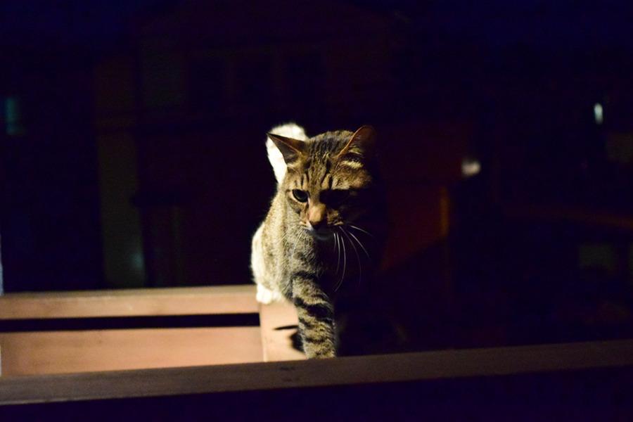 夜のパトロールをする虎ノ介