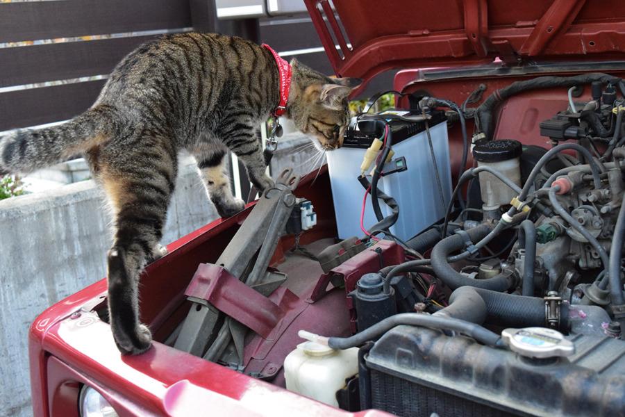 車のチェックをする虎ノ介