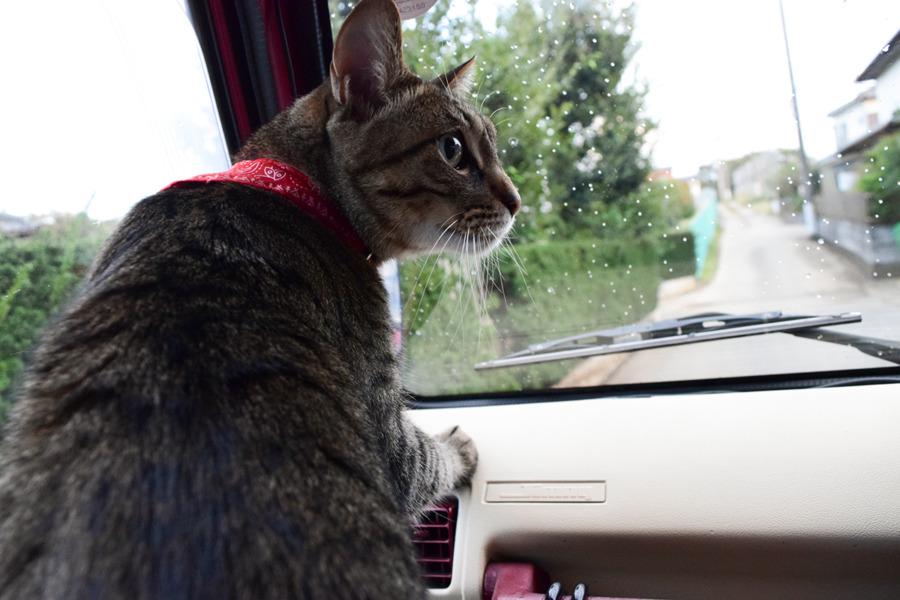 ドライブを楽しむ虎ノ介