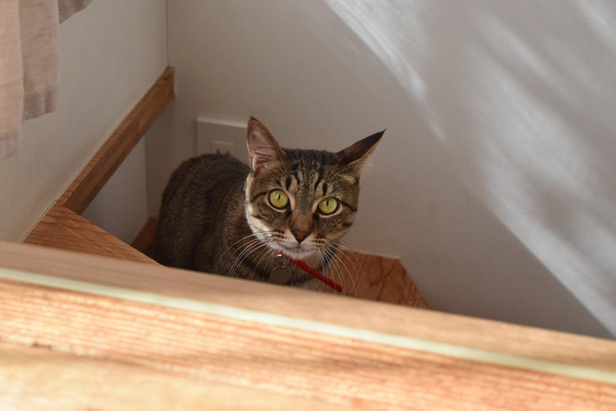 激しすぎる春太を階段から見つめる虎ノ介