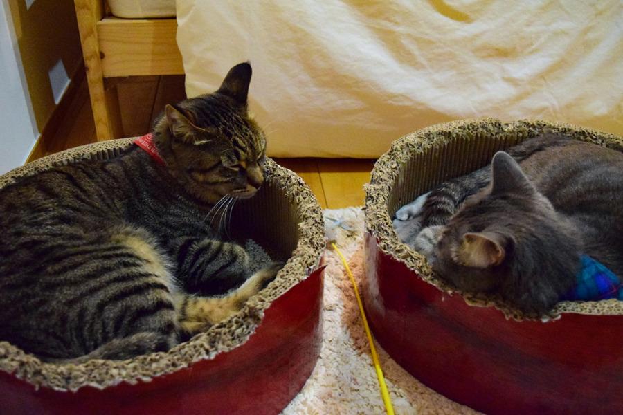 サークルベッドで眠る虎ノ介と春太