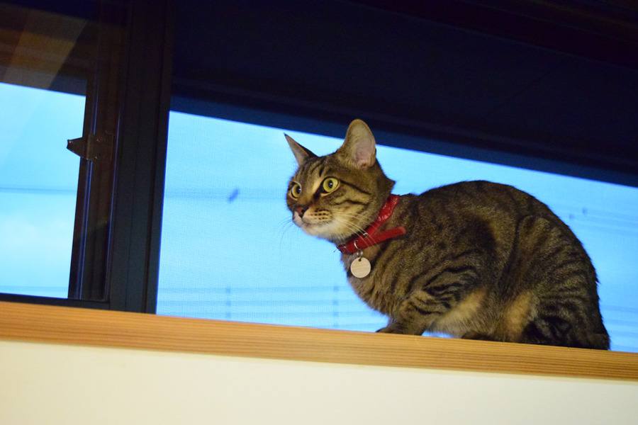 2Fの窓から飛び降りた虎ノ介