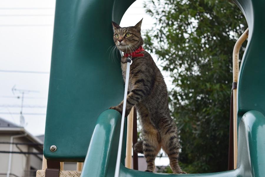 滑り台の上に立って鳥を見る虎ノ介
