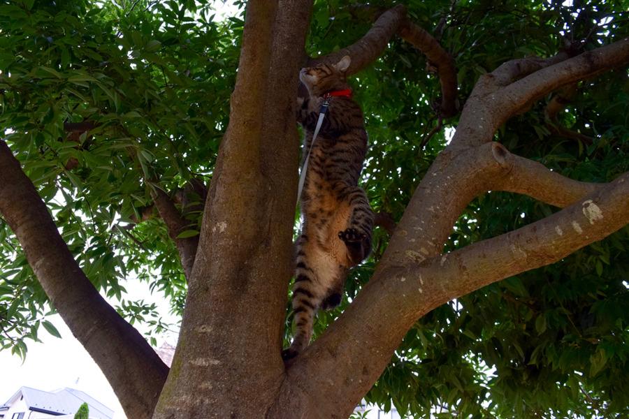 木に登る虎ノ介